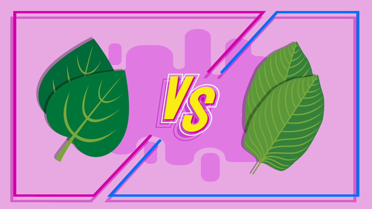 Illustration of kava leaf and kratom leaf