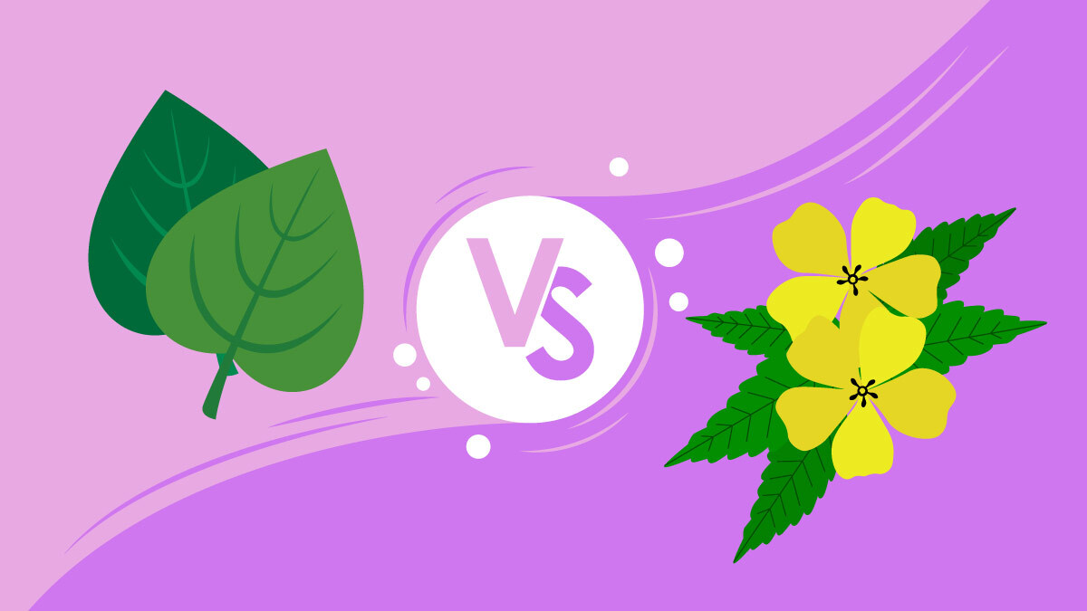 illustration of kava leaf and damiana flower