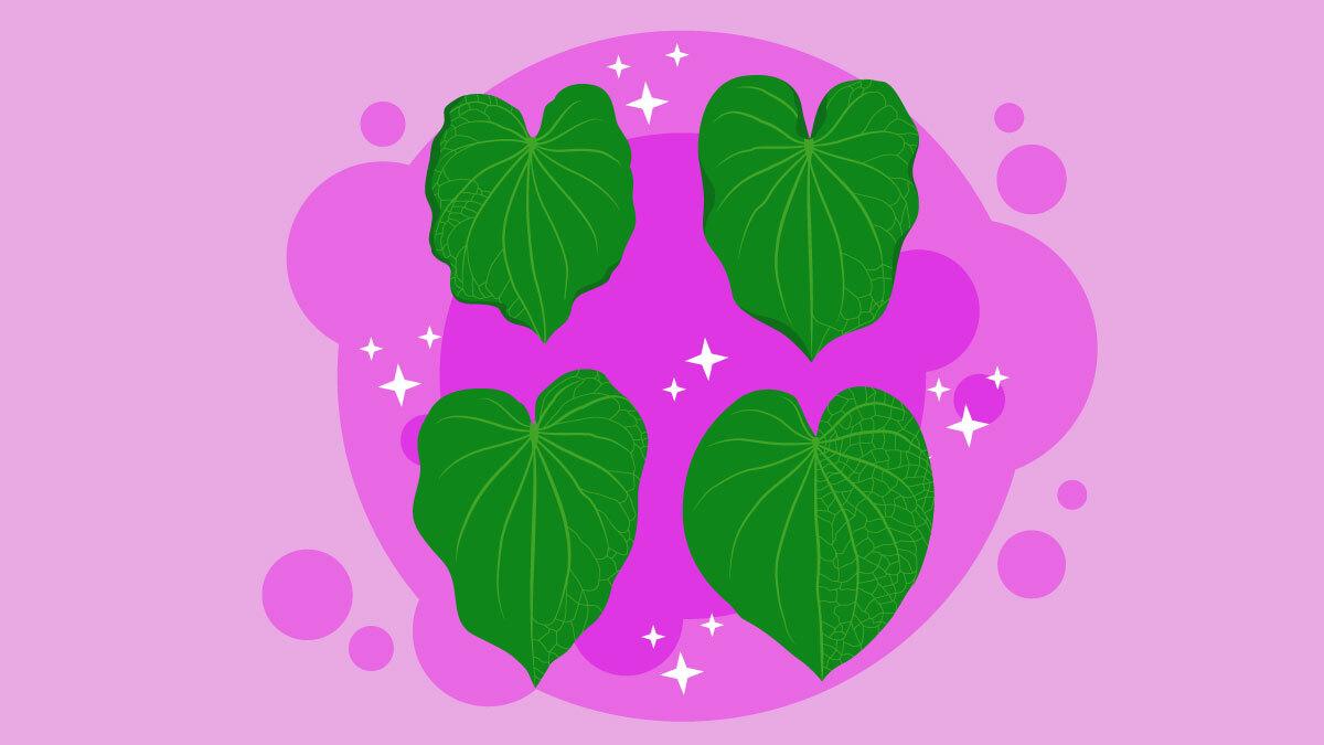 illustration of kava leafs