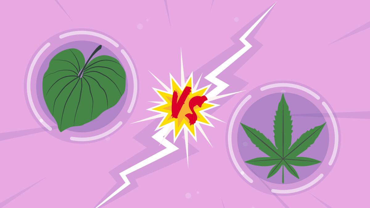 illustration of hemp leaf and kava leaf
